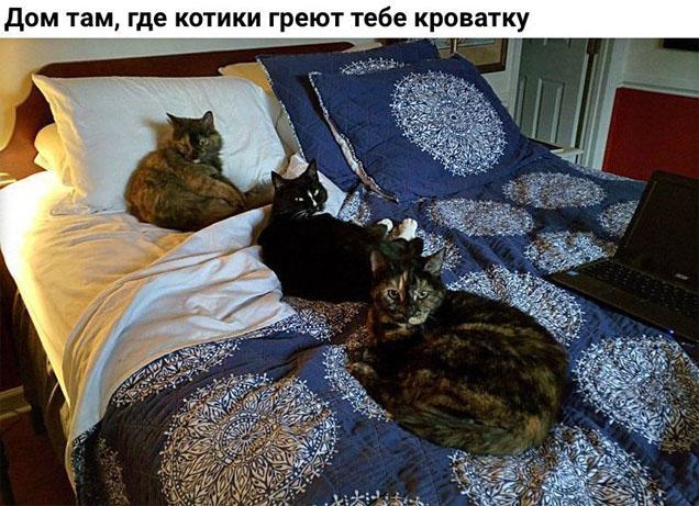 Смешные коты и кошки - самые прикольные и веселые картинки, фото №39 39