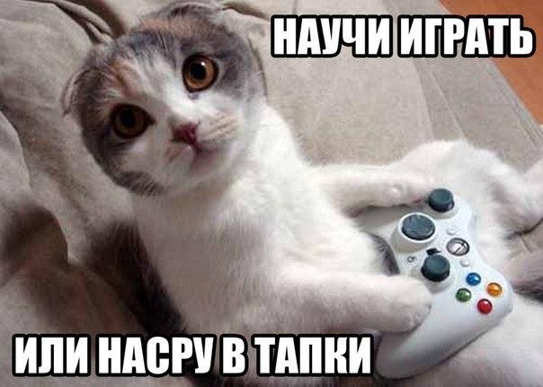 Смешные коты и кошки - самые прикольные и веселые картинки, фото №39 4