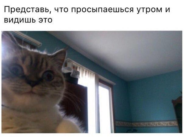 Смешные коты и кошки - самые прикольные и веселые картинки, фото №39 44
