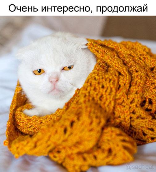 Смешные коты и кошки - самые прикольные и веселые картинки, фото №39 6