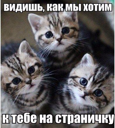Смешные коты и кошки - самые прикольные и веселые картинки, фото №39 7