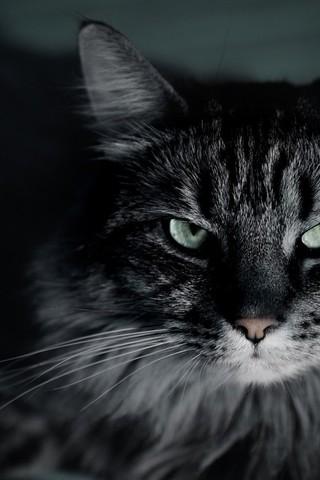 Темные и черные фото на телефон на заставку - самые лучшие и классные 16