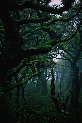 Живые картинки зеленого мира на телефон - самые красивые №1 15