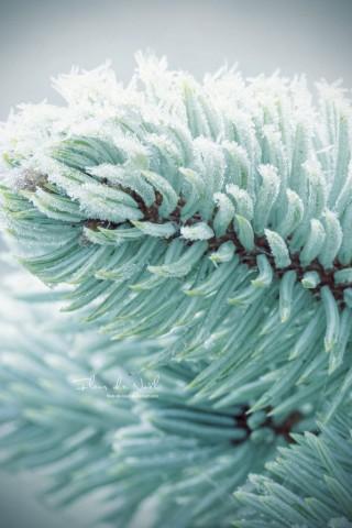 Живые картинки зеленого мира на телефон - самые красивые №1 16