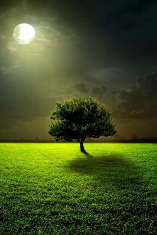 Живые картинки зеленого мира на телефон - самые красивые №1 18