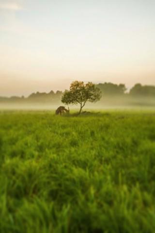 Живые картинки зеленого мира на телефон - самые красивые №1 21