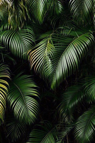 Живые картинки зеленого мира на телефон - самые красивые №1 3