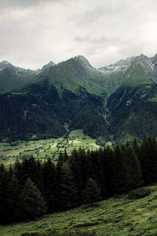 Живые картинки зеленого мира на телефон - самые красивые №1 9