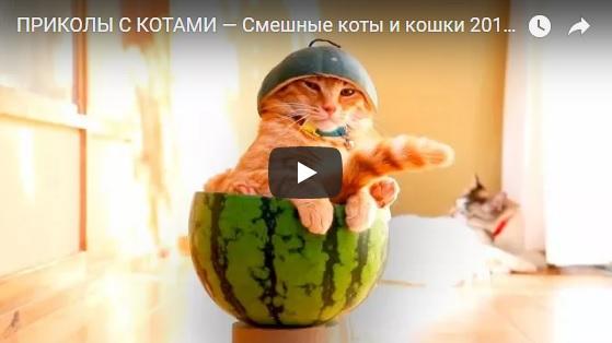 Забавная подборка видео приколов новых - самые смешные №91