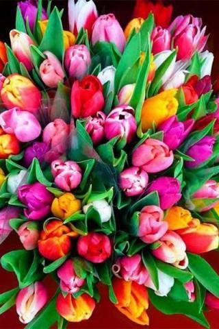 Интересные и красивые цветы картинки на телефон - коллекция №2 1