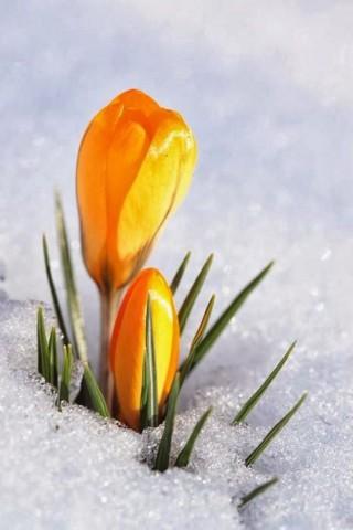 Интересные и красивые цветы картинки на телефон - коллекция №2 11