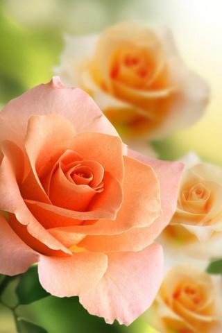 Интересные и красивые цветы картинки на телефон - коллекция №2 12