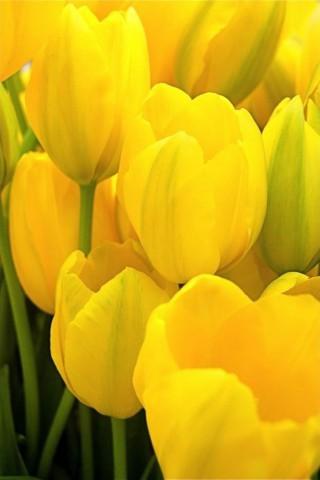 Интересные и красивые цветы картинки на телефон - коллекция №2 14