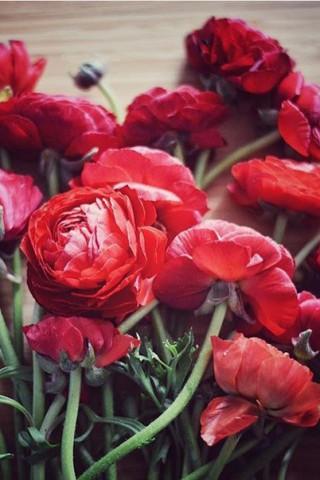 Интересные и красивые цветы картинки на телефон - коллекция №2 15