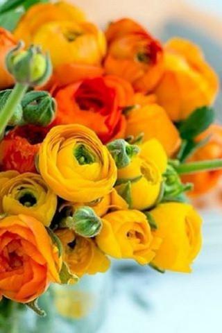 Интересные и красивые цветы картинки на телефон - коллекция №2 18