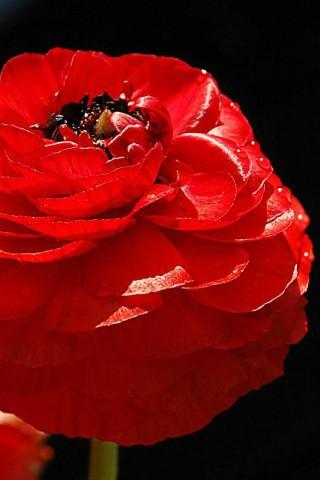 Интересные и красивые цветы картинки на телефон - коллекция №2 19
