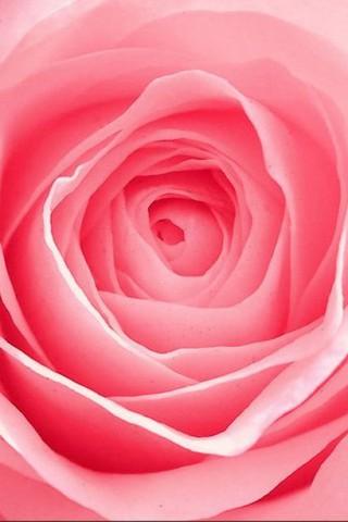 Интересные и красивые цветы картинки на телефон - коллекция №2 2
