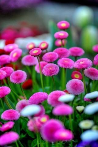 Интересные и красивые цветы картинки на телефон - коллекция №2 20