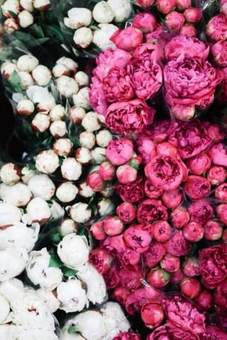 Интересные и красивые цветы картинки на телефон - коллекция №2 3