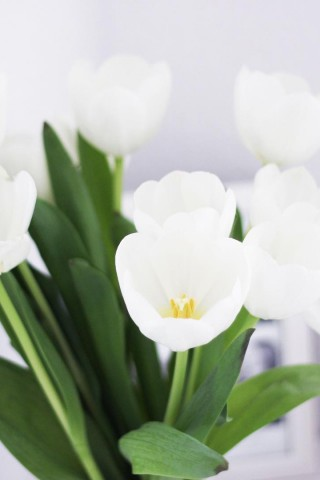 Интересные и красивые цветы картинки на телефон - коллекция №2 8