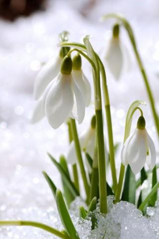 Интересные и красивые цветы картинки на телефон - коллекция №2 9