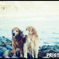 Как правильно мыть собаку - главные рекомендации и советы 2