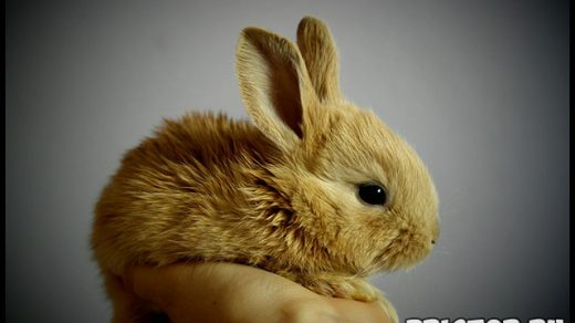 Как ухаживать за кроликом в домашних условиях - основные секреты 1