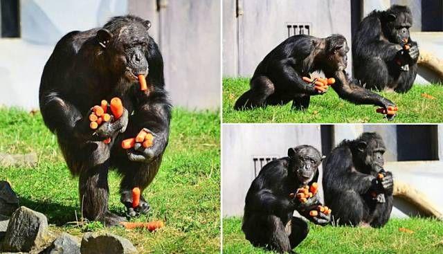 Картинки и фото про животных - смешные и прикольные, подборка №57 8