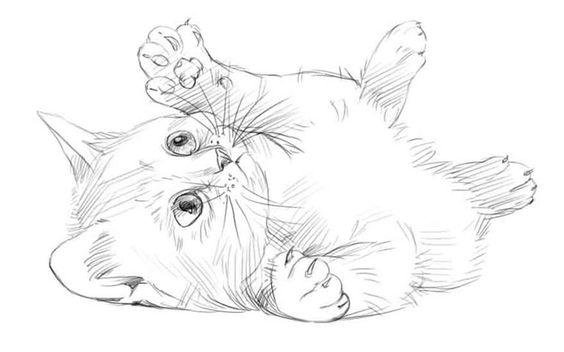 Картинки кошек и котят для срисовки - очень красивые и прикольные 4