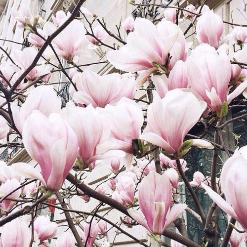 Картинки на аву цветы и букеты - самые красивые и прикольные, скачать 1