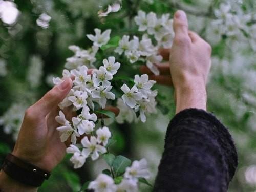 Картинки на аву цветы и букеты - самые красивые и прикольные, скачать 10