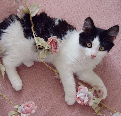 Картинки на аву цветы и букеты - самые красивые и прикольные, скачать 16