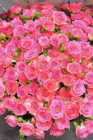 Картинки на телефон букеты и цветы - самые красивые и удивительные 1
