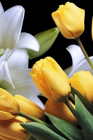 Картинки на телефон букеты и цветы - самые красивые и удивительные 11
