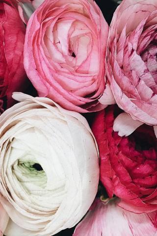 Картинки на телефон букеты и цветы - самые красивые и удивительные 16