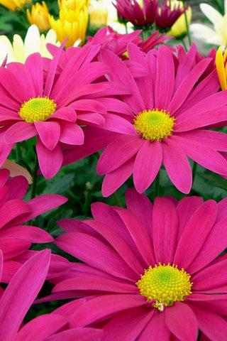 Картинки на телефон букеты и цветы - самые красивые и удивительные 3