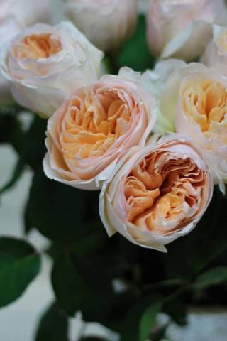 Картинки на телефон букеты и цветы - самые красивые и удивительные 4