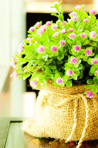 Картинки на телефон букеты и цветы - самые красивые и удивительные 7