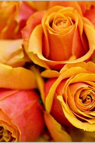 Картинки на телефон букеты и цветы - самые красивые и удивительные 9