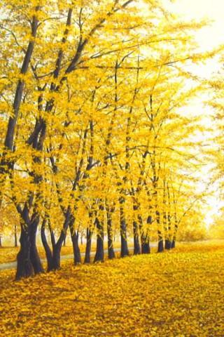 Картинки на телефон природа и пейзажи - скачать бесплатно №6 16