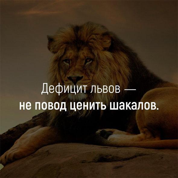 Открытки, прикольные картинки львов с надписями со смыслом