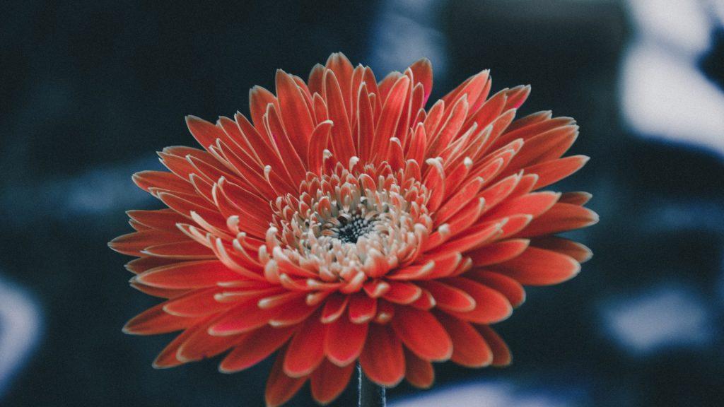 Красивые и интересные картинки цветов на компьютер - скачать №5 2
