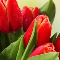 Красивые и интересные картинки цветов на компьютер - скачать №5 9