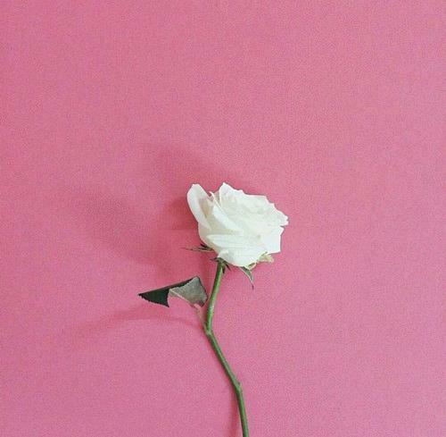 Красивые и прикольные картинки на аватарку для девушек - подборка №5 10