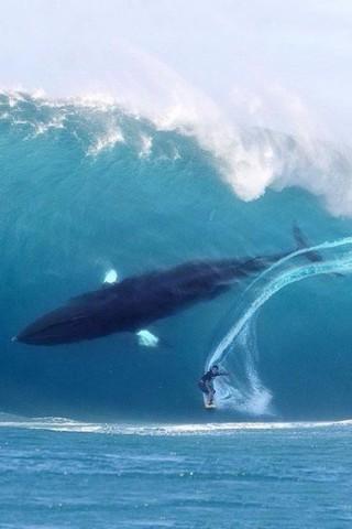 Красивые картинки воды и водного мира на телефон - лучшие заставки №10 8