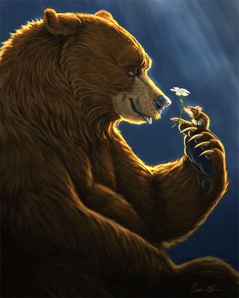 Медведь на картинках и фотках - очень красивые и интересные 5