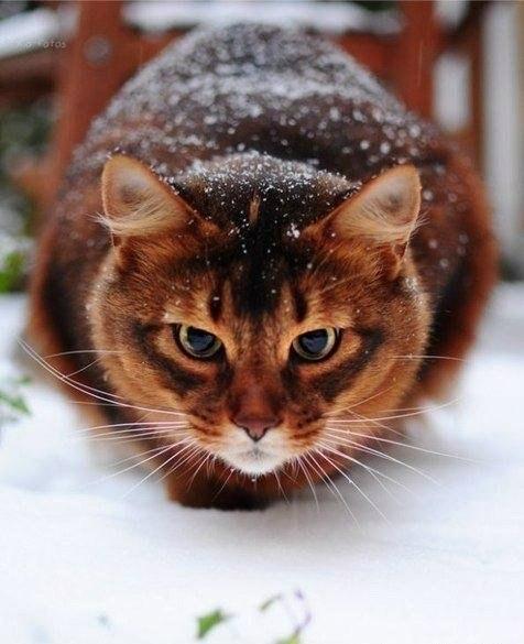 Милые картинки с котиками - самые удивительные и приятные 1