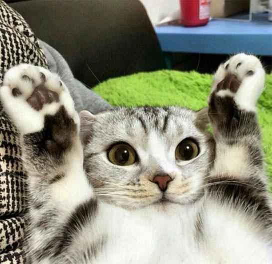 Милые картинки с котиками - самые удивительные и приятные 12