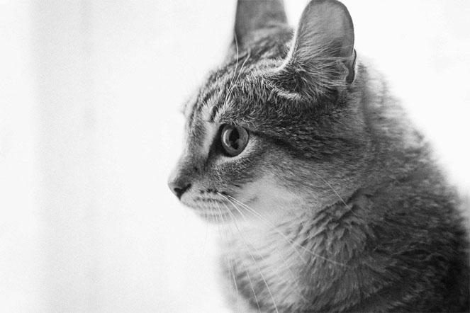 Милые картинки с котиками - самые удивительные и приятные 13
