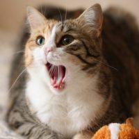Милые картинки с котиками - самые удивительные и приятные 15